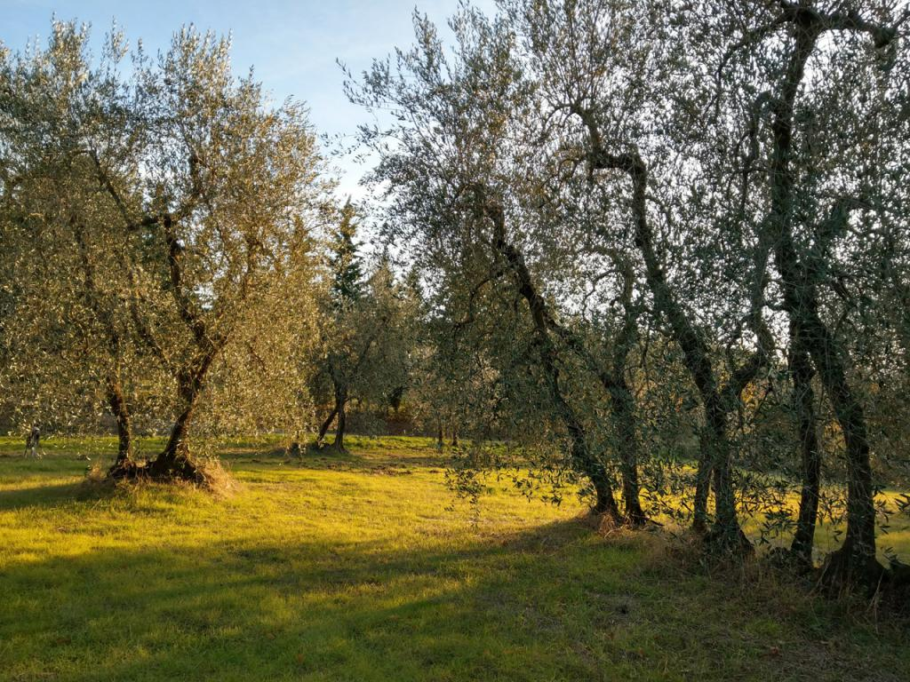 Organic farm with olive groves